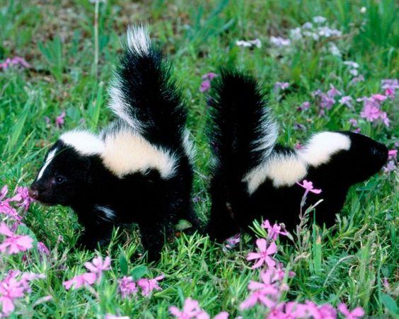 Risultati immagini per pictures beautiful animals and flowers