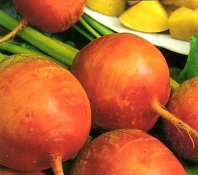 Golden Beet Seeds. The sweetest, mildest beet available. http://www.farmersmarketonline.com/plants.htm