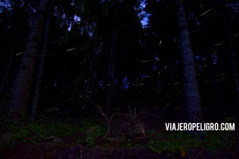 Luciernagas #Tlaxcala: Pocas fueron las que aparecieron esa noche.  Fireflies