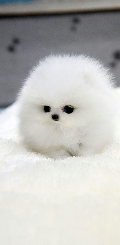 Mr Fluffy Me When I M Not Going To School Cute Animals Cute