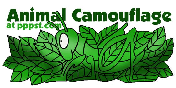 Camouflage - Animal Adaptation FREE presentations in PowerPoint format ...