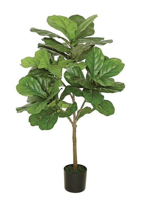 Large Leaf Fig Tall Floor Ficus Tree In Pot Potted Trees Plants Plant Decor Indoor