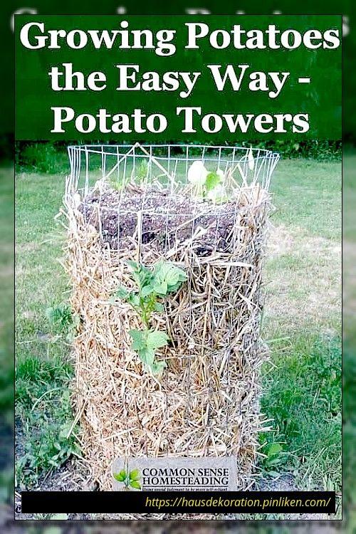 Kartoffeln In Behaltern Sacken Oder Turmen Anbauen Mit Bildern Kartoffeln Wachsen Gemusebeet Hinterhof Garten