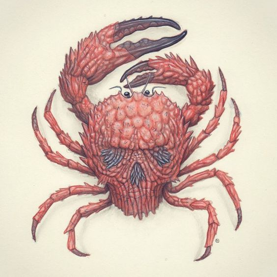 Showchicken - Nick Sheehy SkullCrab. Graphite and watercolour on paper.