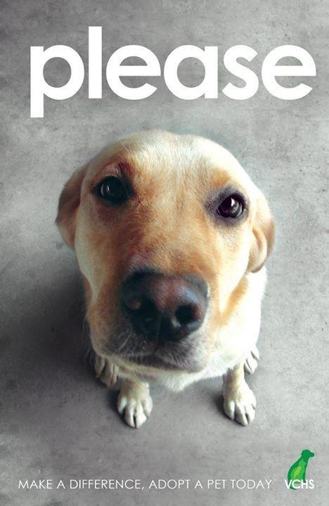 Rescue Is Best Rescuedog Dog Itsarescuedoglife Humane Society Animal Shelter Pets