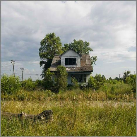 feral-houses-2