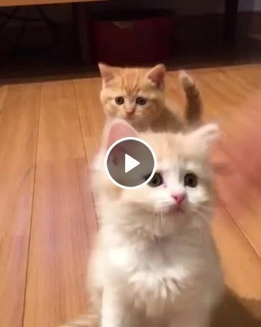 Gatinhos engraçados se divertindos