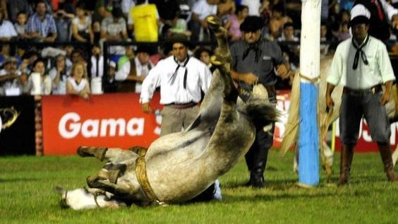 rohibit the State sponsor or finance shows and similar criollas jineteadas