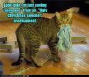 Cat Stealing Knitting