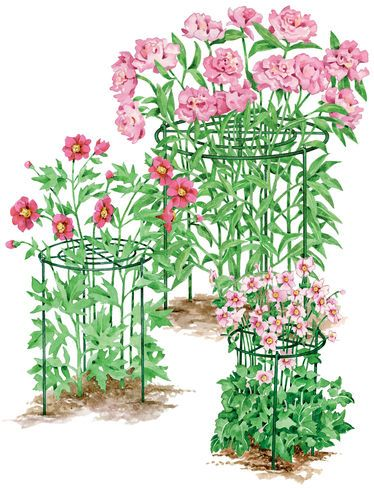 Peony supports. Grow Through Supports, Set of 3