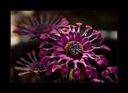 zeldzame bloemen - Google zoeken