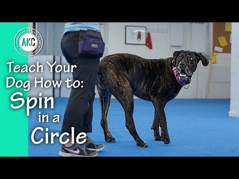 Trick Dog Training Videos Akc Dog Shows Dogs Dog Training Videos