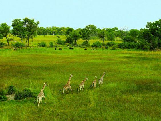 Botswana in the green season