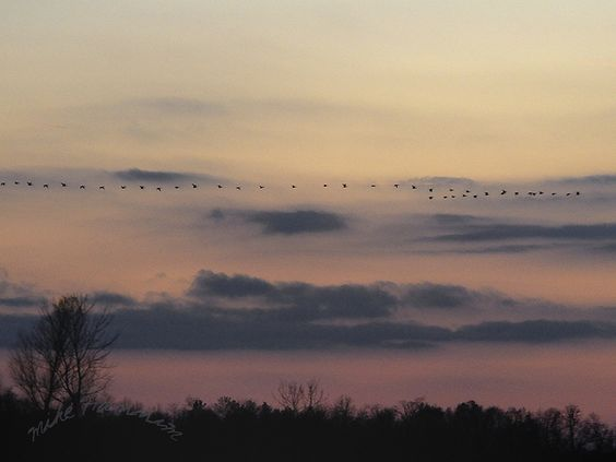 Beautiful subtle colors!!! Sunset - November 2010 With Geese Flying North by Mike Hannum (Magic Island Photography)