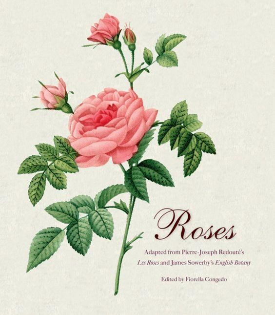 Pedro José Redoute Roses Pierre Joseph Redoute 39 s