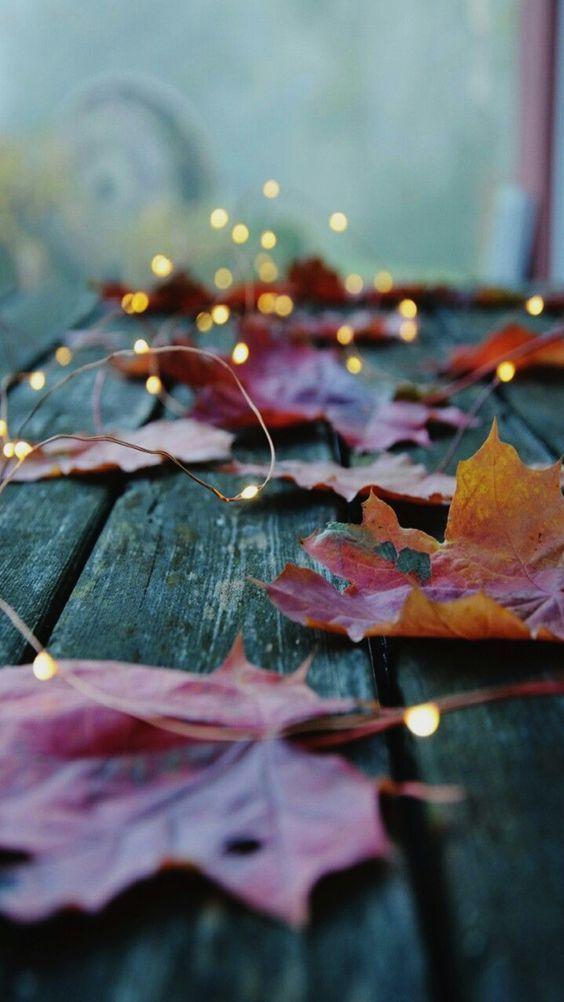 Leaves Fall Wallpaper Autumn Photography Autumn Aesthetic
