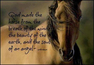 Dios creó al caballo con un soplo de viento, la belleza de la tierra y el alma de un ángel.