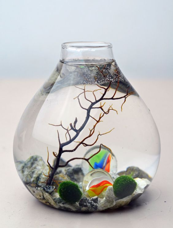 Marimo terrarium and marbles on pinterest for Moss balls for fish tanks