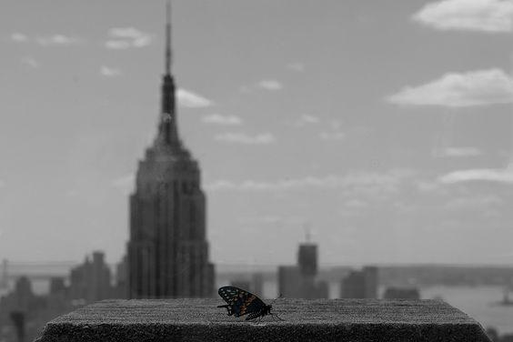 Mariposa en Manhattan by Jordi Oller Macia, via 500px