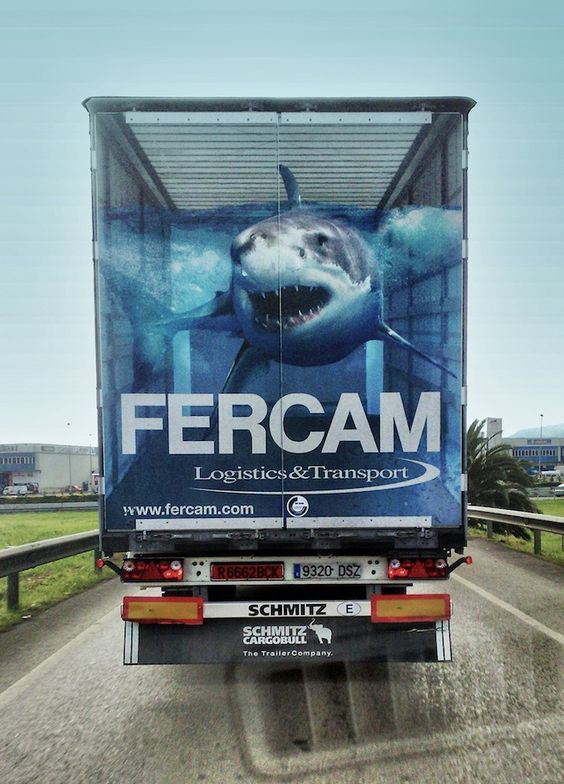sharks on the road...