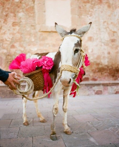 cute ! // photo by Aaron Delesie // http://www.snippetandink.com/photo-features/destination-wedding-zacatecas-mexico/