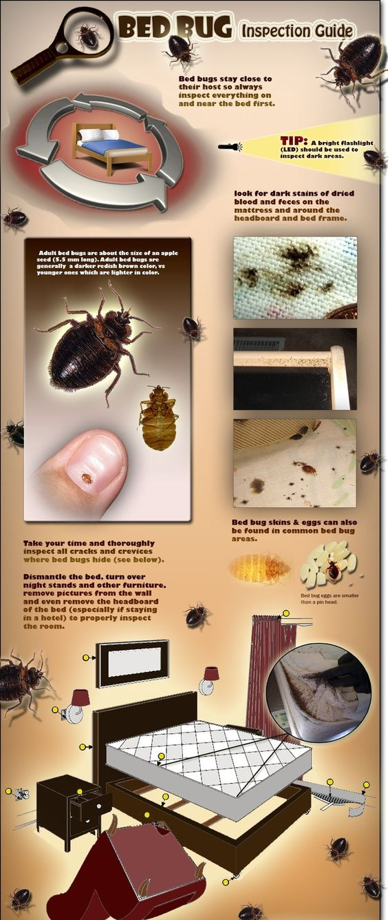 Bed Bugs And Beds On Pinterest