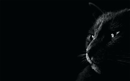 Black Tiger Wallpaper Wallpapers Free Photos Images Pictures Hd Download Black Cat Images Cat Wallpaper Black Hd Wallpaper Black wallpaper desktop hd