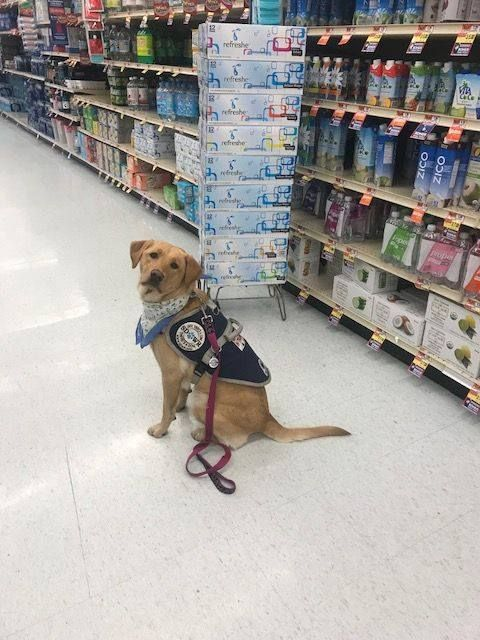 Pin On Sdwr Service Dogs In Training
