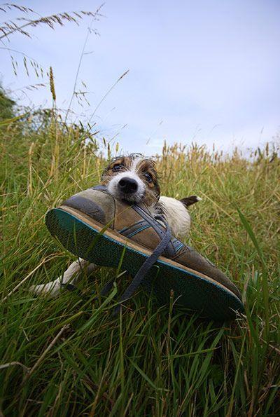 shoe!