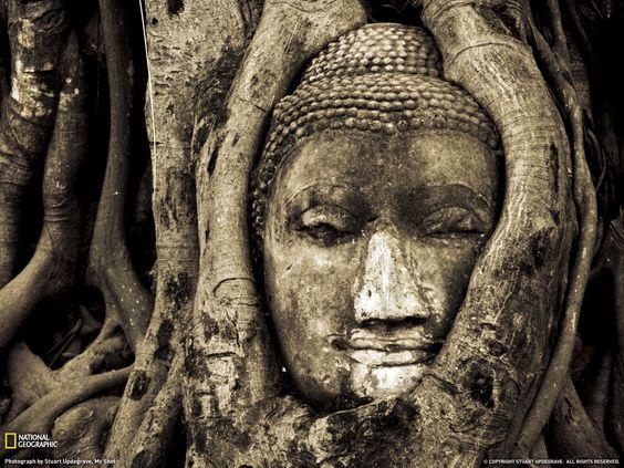 Resultado de imagen de monjes budistas y encerado