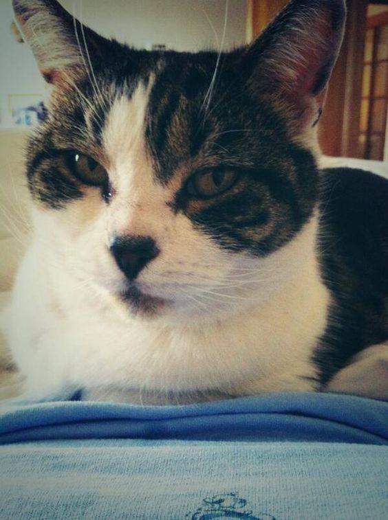 Eddie Caitriona Balfe S Cat On Twitter Com