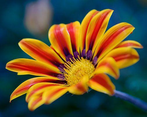 Flower Through My Lens - Coleções - Google+