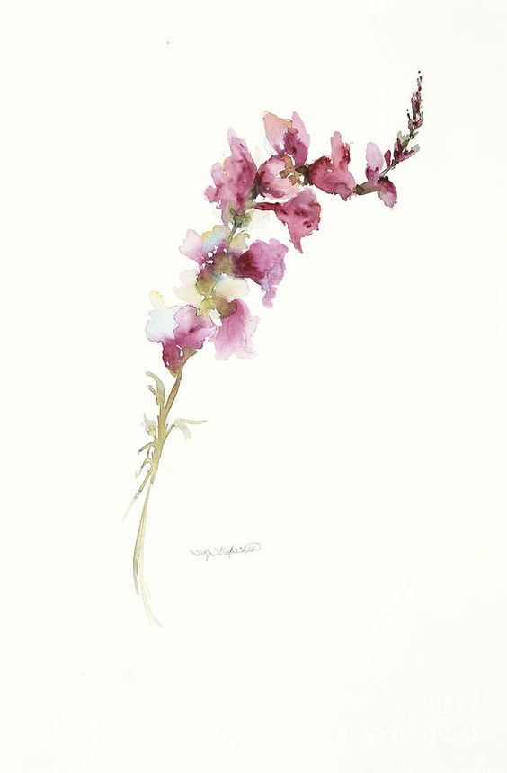 Single Stem Snapdragon Painting | Tattoos | Pinterest ...