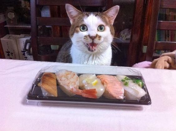 cat ネコとお寿司