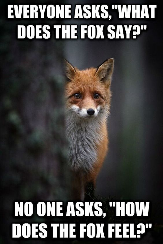 It doesn't matter what does the fox say Depressed fox is depressed