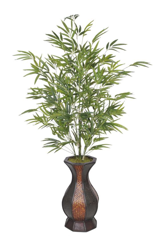 Bamboo Floor Plant in Planter