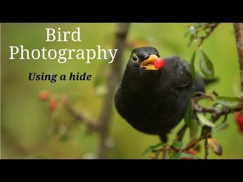 Bird Photography Using A Hide Photographing Garden Birds