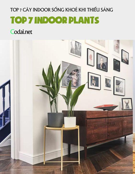 Top 7 cây Indoor (cây nội thất, cây trồng trong nhà) sống khoẻ trong môi trường thiếu sáng