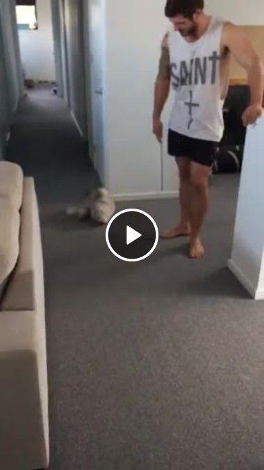 Gato fofo dá um  salto para pegar um brinquedo