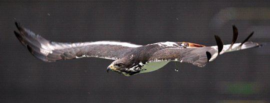 "Awesome pic of ""Taima"" Seahawks team bird! #FavoriteSeahawksPhoto"