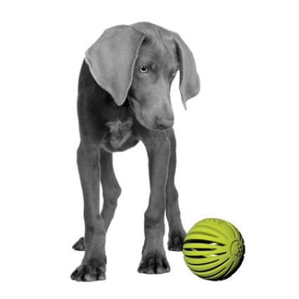 Petprojekt has awesomely innovative products! http://bit.ly/Hylc9p