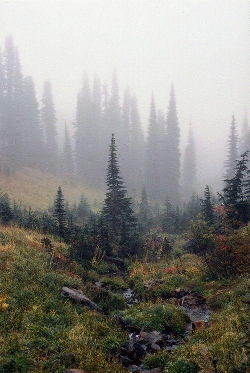 Forest like a novel.