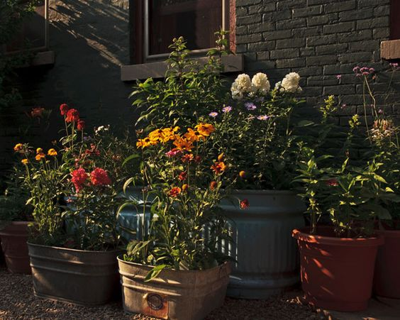 On hot days, containers may need to be watered more than once a day. And remember, smaller containers and hanging baskets dry out faster than large containers.