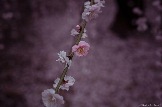 One of by Hidenobu Suzuki on 500px: