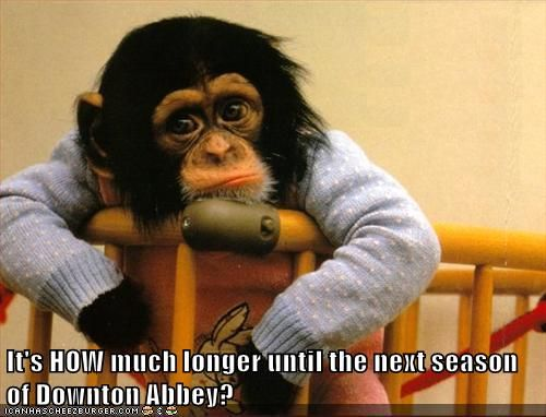 It S How Much Longer Until The Next Season Of Downton Abbey Monkeys Funny Funny Monkey Pictures Monkey Pictures