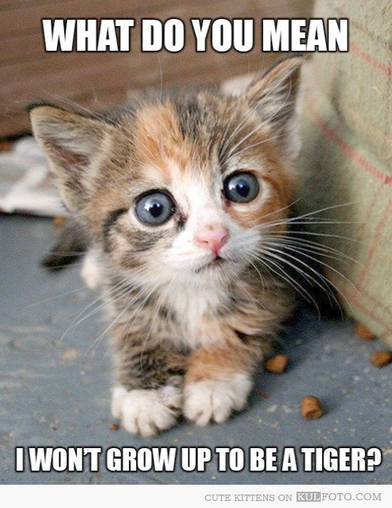 Cute Cats For Whatsapp Dp Cute Kittens Running Cute Animals Funny Animal Pictures Cute Baby Animals
