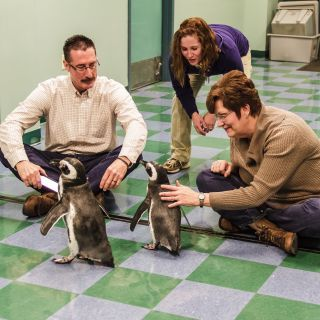 """Chill out this summer with a behind-the-scenes tour of Penguin & Puffin Coast at the Saint Louis Zoo! During this one-hour tour, you will learn about the Zoo's conservation center for threatened Humboldt penguins, see the kitchen/food prep area and have an """"up close and personal"""" visit with two Magellanic penguins! You'll wrap up your tour with a walk through the exhibit. $60/person."""