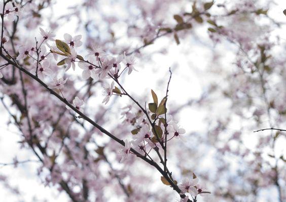 Spring by Маша Завадская on 500px