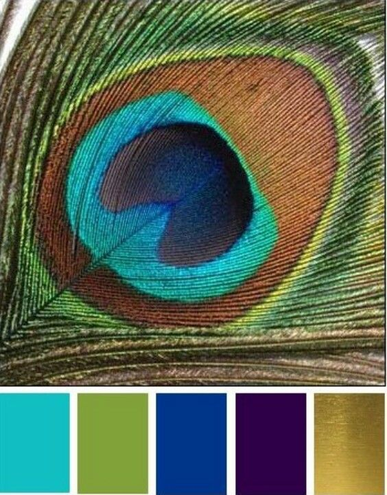 accent colors peacocks and teal on pinterest