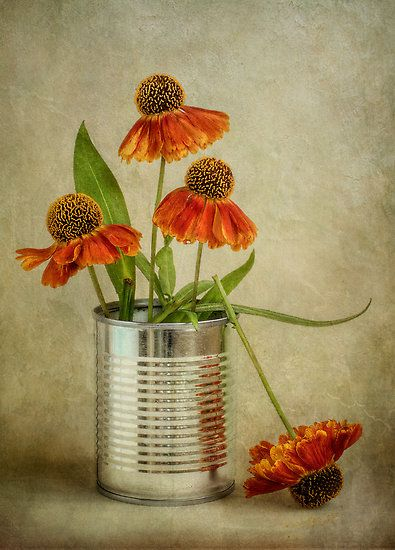 Heleniums by Mandy Disher: